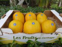 Melon Jaune Canaris by Les Fruits De Carthage