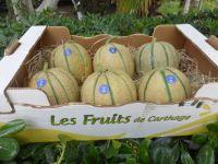 Melon Charentais Brod�© by Les Fruits De Carthage