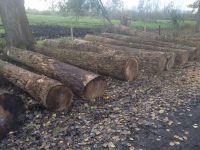 German poplar round logs