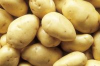 High quality Fresh potatoes supplier