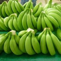 Fresh Green Cavendish Banana supplier