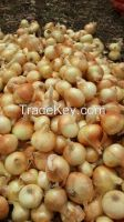 fresh red &golden onion