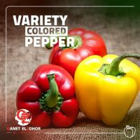 pepper colored and hot