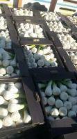 Egyptian Fresh Garlic