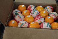 oranges navel