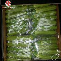 Egyptian zucchini