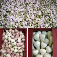Egyptian Fresh Garlic