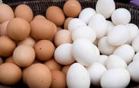 Broiler Fertile eggs/Ross308 Chicken Hatching eggs/Fresh Chicken Table Eggs for sale in bulk