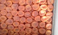 Premium Grade Natural Dried Apricot without Pits Conventional