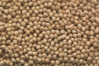 Top Quality Chick Peas, Kabuli Chick Peas grade A for sale Competitive Price