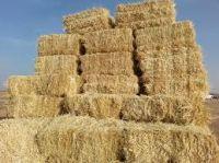 Wheat Straw, Wheat Hay, Rice Husk, Corn, Orange, Kinnow, Scrape Tube,