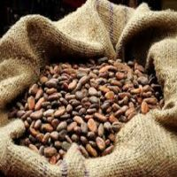 Good quality Dried Grade A Cocoa/ Cacao/ Chocolate bean