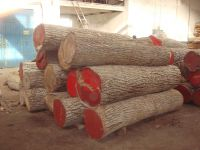 Walnut, Walnut Lumber, Logs