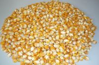 Yellow Corn(Human Consumption & Animal Feed)