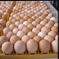 Fresh Table White & Brown Chicken Eggs