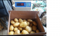 Potato from pakistan
