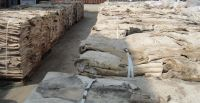 DRY & WET SALTED DONKEY SKINS / HIDES, COW, GOAT, BUFFALO, RABBIT, SHEEP, HORSE  SKINS/HIDES