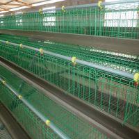 automatic chicken cage poultry equipment with feeding and drinking system
