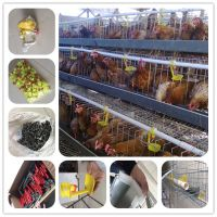 poultry farm chicken egg layer cages for zambia