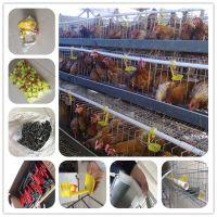 agriculture farming breeder equipement broiler chicken raising cage