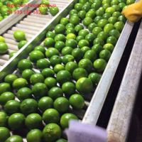 Fresh Seedless/seed Lime