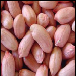 Groundnut | Peanut