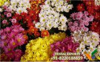 buy indian fresh jasmine