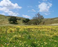 Erosion Control Grass Seed