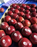 Fresh Red Delicious Apples / Golden Delicious Apples