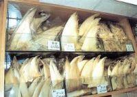 Dried Shark Fins, Frozen Shark Fins