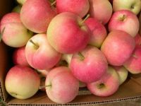 Fresh Fuji apple fresh apple fruit and other fruits on Wholesale