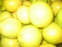 Fresh Navel and Valencia Oranges, Fresh  Golden delicious Apple and Fresh lemon