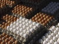 Fertile Hatching Chicken Egg/Fresh Chicken Table Eggs/Quail Eggs, ostritch eggs