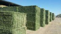 Alfalfa Hay, Animal feed, Chicken feed, Dog feed, Cattle feed, Horse feed, Pig feed, corn meal