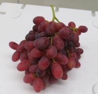 Premium Australian Crimson Seedless Grapes