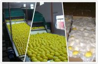 Eureka Lemon, Fresh Lemon, Anyue lemon
