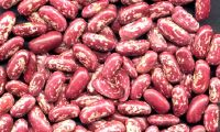 HIGH QUALITY HEANLTHY RED SPECKLED KIDNEY BEANS