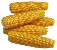 NEW CROP BULK DRIED YELLOW CORN / YELLOW MAIZE FOR ANIMAL FEED