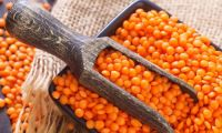 Red Whole Lentils Suppliers, Split Red Lentils, Masoor Dal, Direct from FACTORY Prices