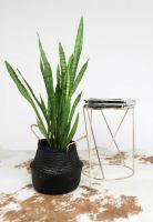 Black color seagrass basket/ storage basket/ belly seagrass basket