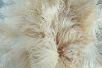 Natural Real Ostrich Feather