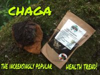 EXTRACT CHAGA MUSHROOMS SUBLIMATED