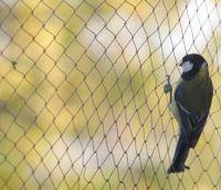 Anti-Bird Net/Bird Net