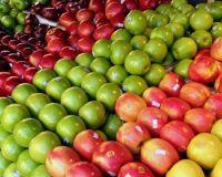 Fresh Apple Fruit/Fresh Apples/Apple