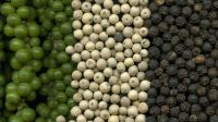 Top Quality White Pepper