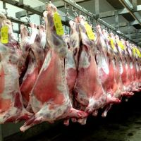 HALAL FRESH FROZEN GOAT LAMB SHEEP MEAT CARCASS