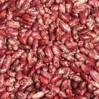Light Red Speckled Kidney Beans