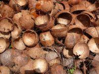 Raw Coconut shel