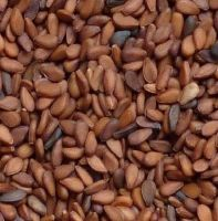 Bangladeshi Black and Brown fresh natural sesame seeds