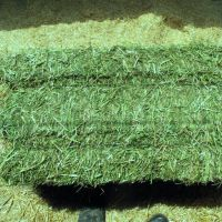 Bulk Alfalfa Hay and Alfalfa hay best price.